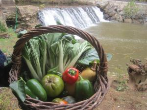 2013-10 IMG_4841 mill house garden veggies falls (Large)