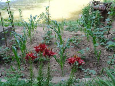 2014-06 DSC00891 mill house garden flowers creek (Large)
