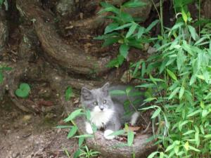 2014-06 DSC00900 mill knoll kitty (Large)