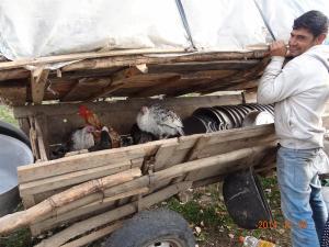2014-10 DSC01510 DSC08667 roma trip gypsy caravan chickens pots (Large)