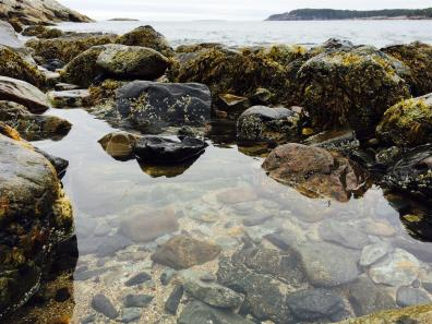2015-09 IMG_1614 acadia thunder hole tidal pool (Large)