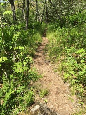 2015-05 IMG_20150523 IMG_0582 appalachian trail path (Large)