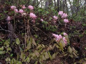 2016-04 IMG_4365 spring mpr flowers (Large)