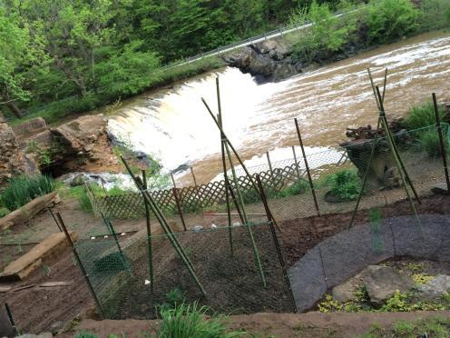 2016-05 IMG_4385 mill garden dam (Large)