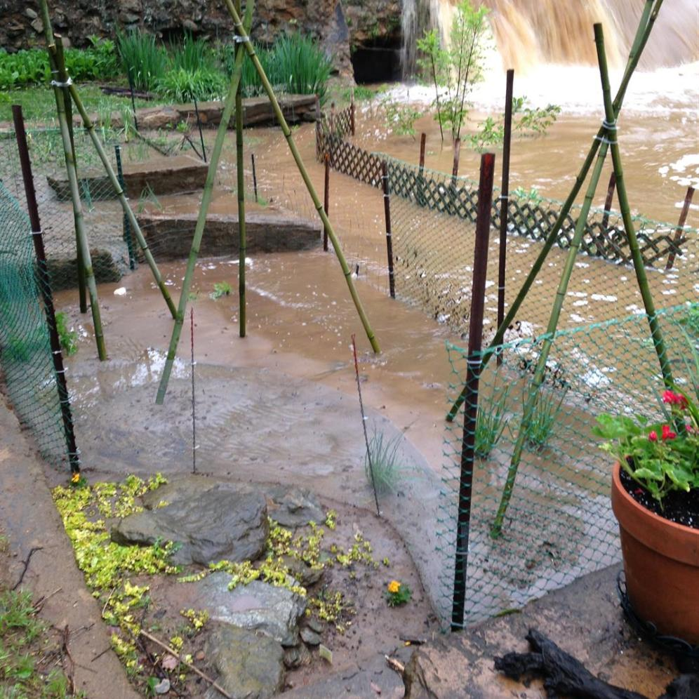 2016-05 IMG_4407IMG_4425 mill garden flooded creek (Large)