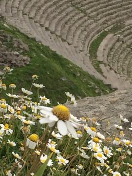 2016-03 IMG_3768IMG_4259 pergamum amphitheater flower (Large)