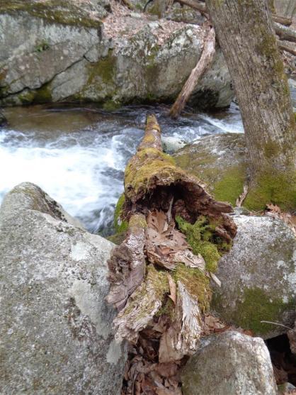 2014-04 VA DSC00101 blue ridge stream log (Large)