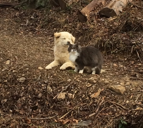 2016-03-img_3475-honey-kitty-on-knoll.jpg