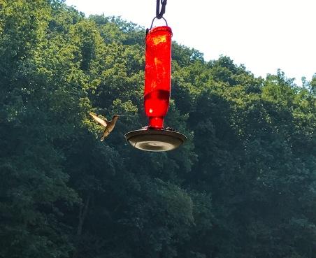 2017-09 IMG_8736 mill porch hummingbird_edited