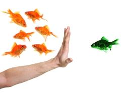goldfish marginalization